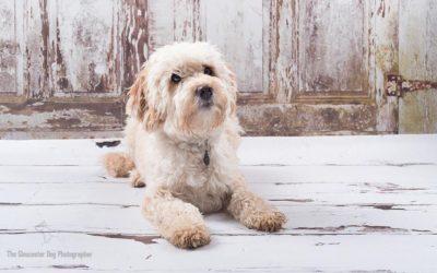 Saturday Spotlight- The Gloucester Dog Photographer