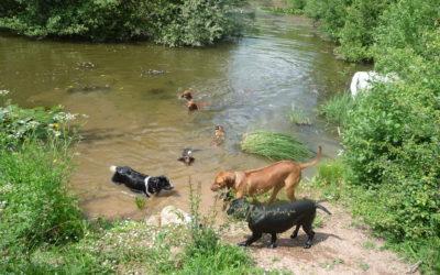 Saturday Spotlight – Meadows Petcare Huntley