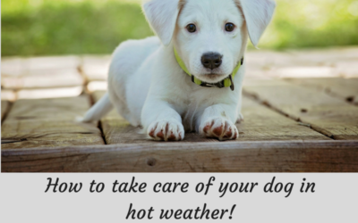 How to take care of your dog in hot weather