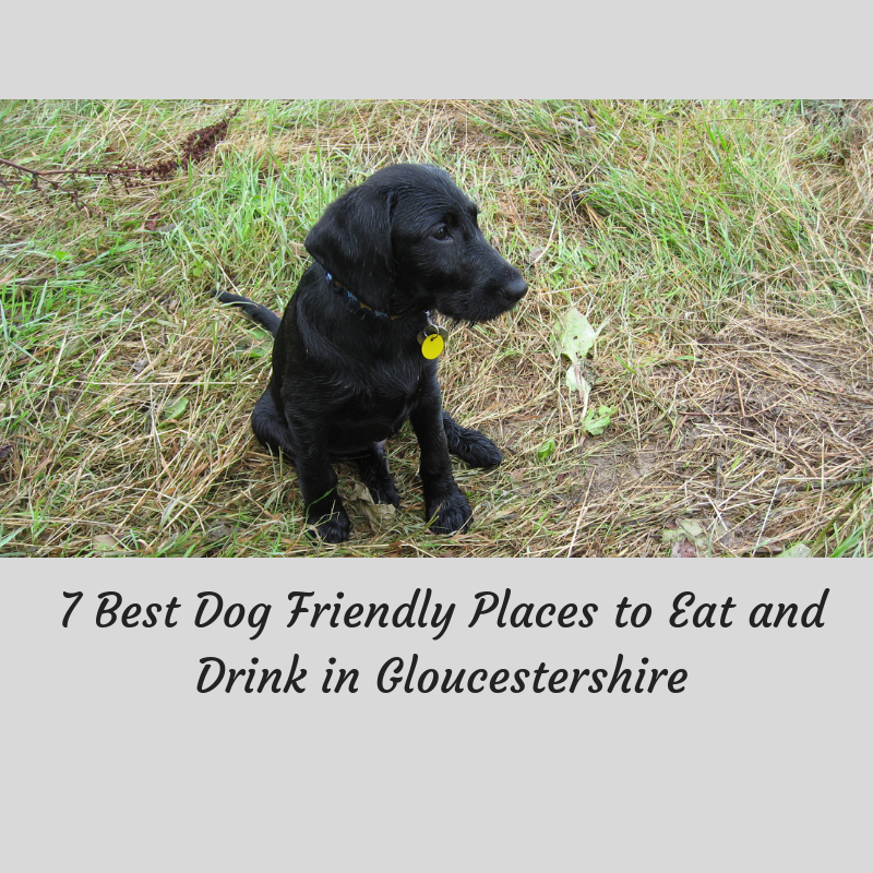 7 Best Dog Friendly Places to Eat and Drink in Gloucestershire
