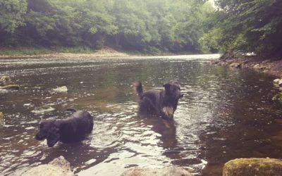 Saturday Spotlight- Muddy Buddies Cotswold Dog Care