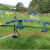 Saturday Spotlight- The Scurry School and Dog Agility Longhope