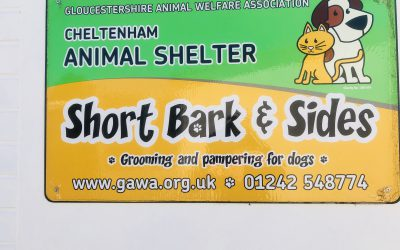 Saturday Spotlight- Cheltenham Animal Shelter and Short Bark & Sides Dog Grooming