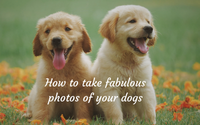 How to take fabulous photos of your dogs